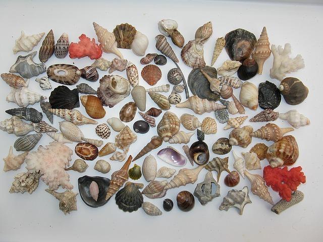mušličky z moře
