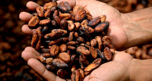 kakaové boby v dlani