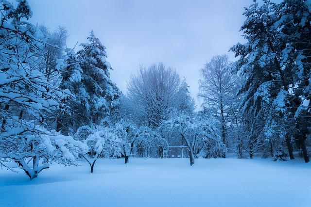 sníh na zahradě